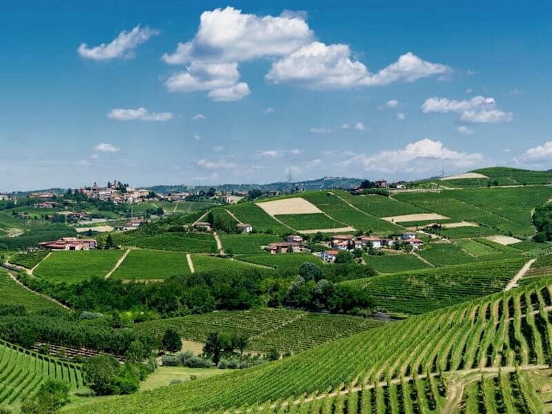 Barbaresco valley