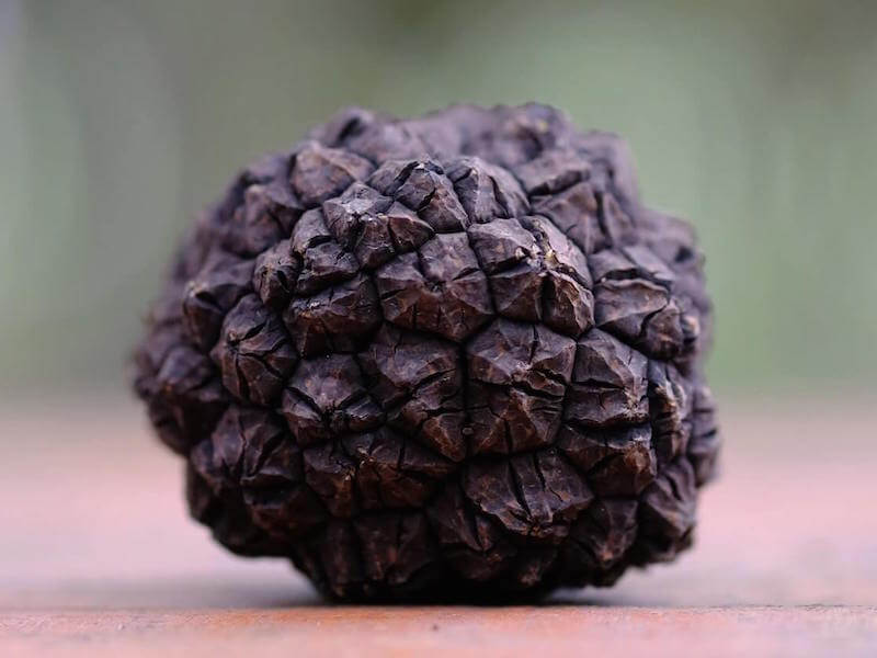 Black truffle of Mugello, tuscany