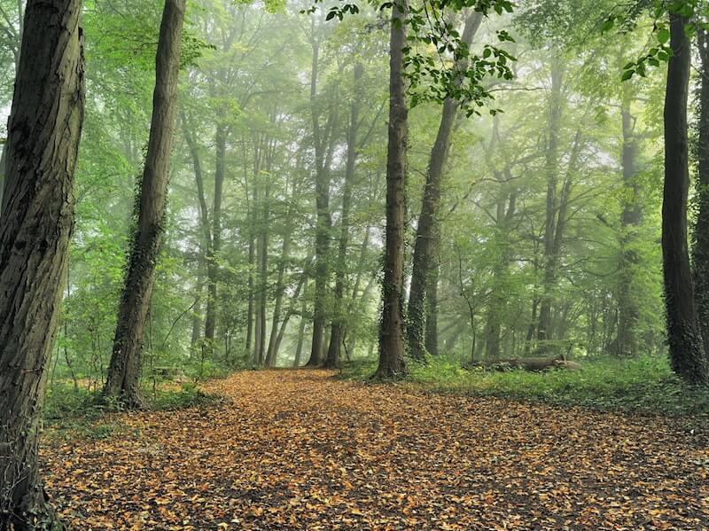 Grosseto woods