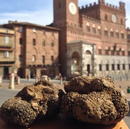 Siena truffle hunting tour
