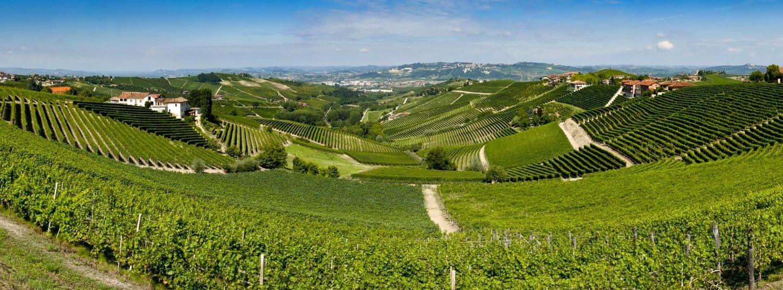 alba vineyard landscape