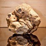 beautiful alba white truffle