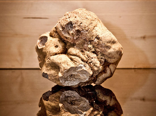 beautiful alba white truffle