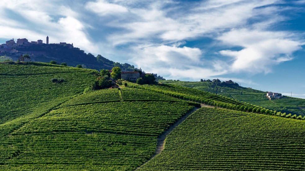 langhe countryside